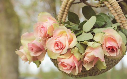 roses noble roses basket