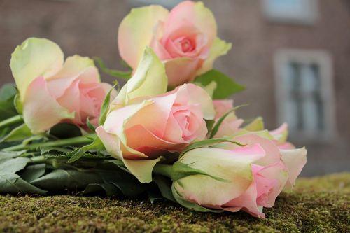 roses noble roses flowers