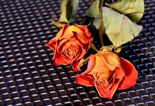 roses dried trockenblume