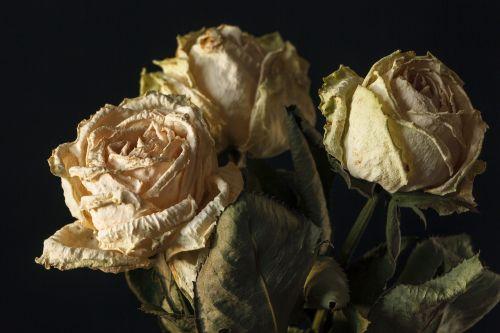 roses dried flowers flowers