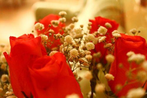 roses bouquet petals