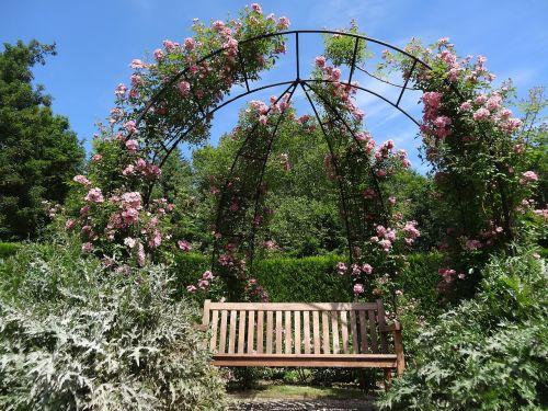 roses garden flower