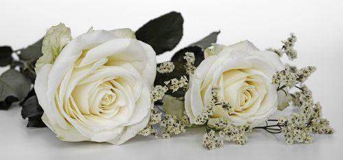 roses wedding rose flower