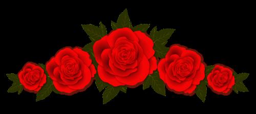 roses flowers vignette
