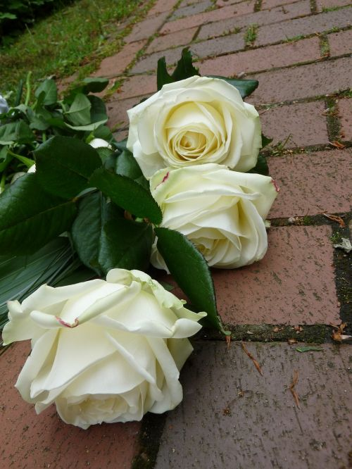 roses white funeral