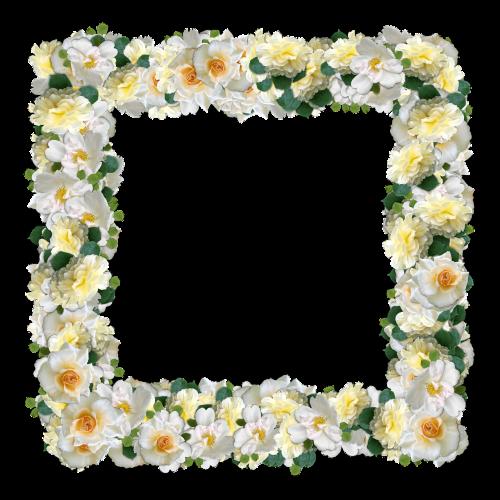 roses flowers framework