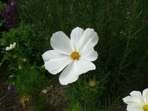 roses,white,blossom,bloom,rose bloom,plant,valentine,love,red rose,bloom,mother's day,romantic,beauty,flower,fragrance