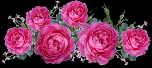 roses  gypsophila  flowers