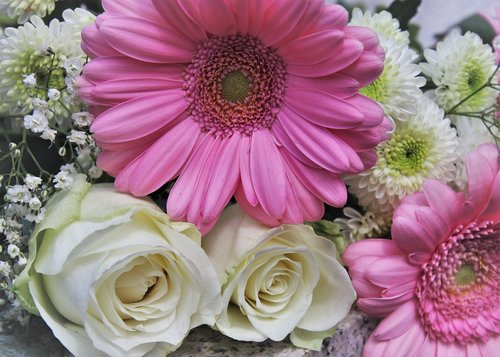roses  romantic  pink