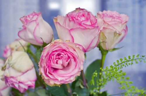 roses bouquet flowers