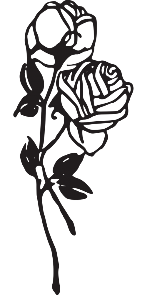 roses flowers floral