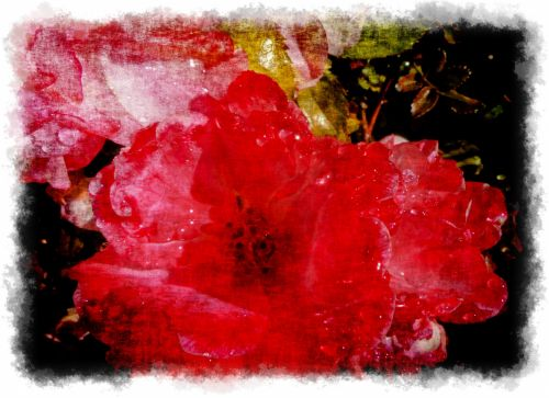 Roses In Grunge