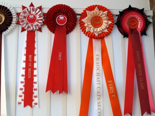 rosettes first prize