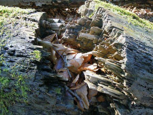 rotten wood burst fragmented
