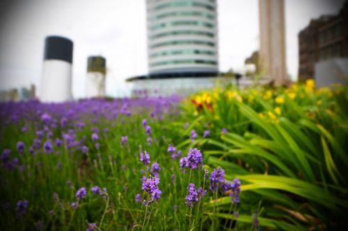 rotterdam port of rotterdam flowers