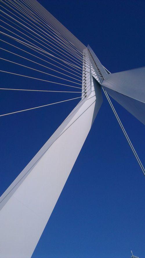 rotterdam swan erasmus bridge