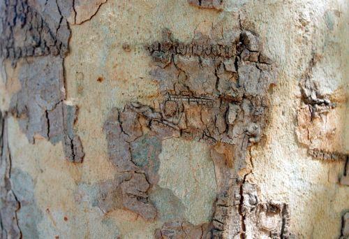 Rough Tree Background