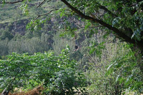 Rough Vegetation And Cliffs