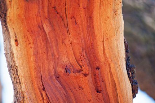 Roughly Split Wood