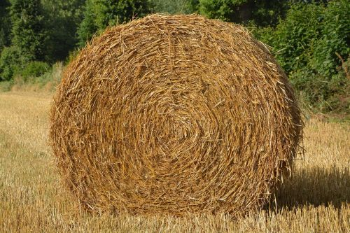 roumballer straw nature pre