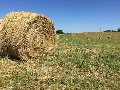 round hay bale big round bale farm scene