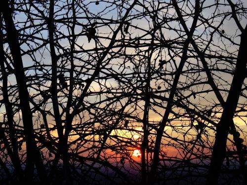 rovi sunset season