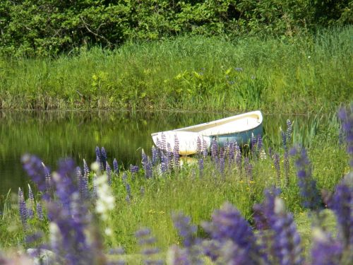 Row Boat In Pond