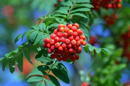 rowan red balls