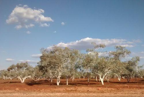roy hill western australia red
