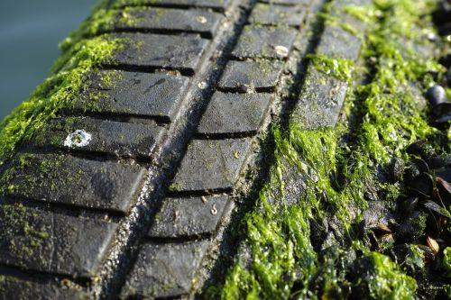 rubber macro moss