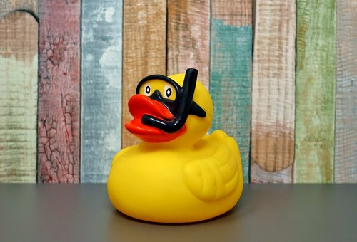 rubber duck  divers  quietscheente