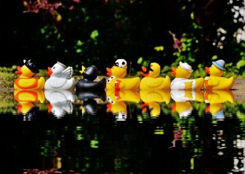 rubber ducks bath ducks fun bathing
