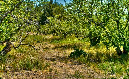 Rugged Dirt Path