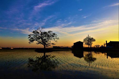 rural sunset wood