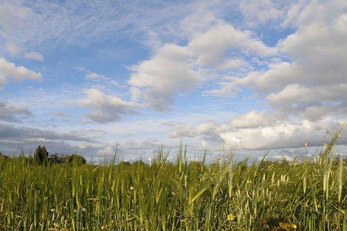 rural  field  campestre