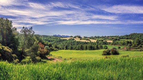rural landscape  field of cereals  agriculture