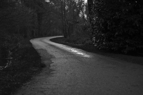 rural road road country lane