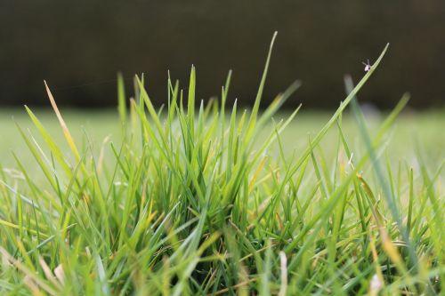 rush grass background
