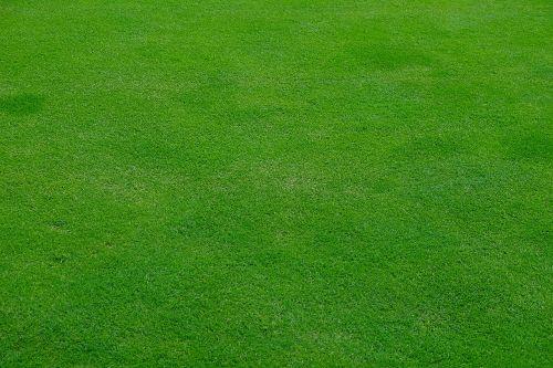 rush meadow grass