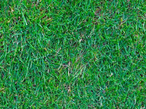 rush grass green