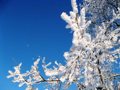 russian winter beauty nature