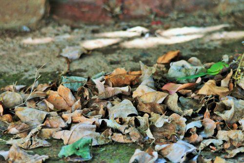 Rustle Of Dry Leaves
