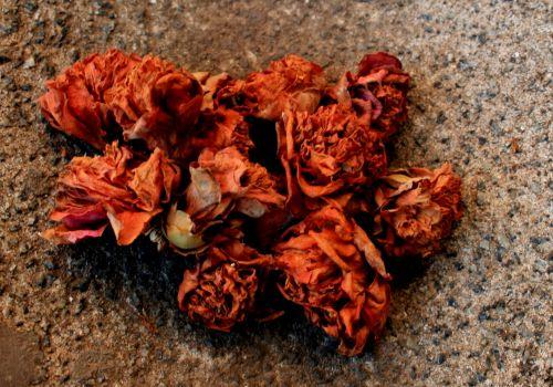 Rusty Dry Flowers