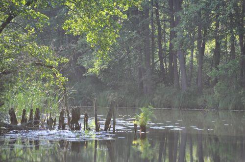 upė, saulėtekis, migla, vanduo, medžiai, pienas, tyla, upė auštant