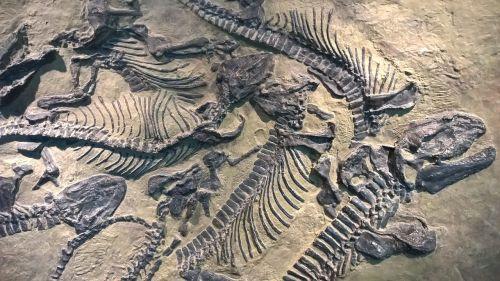 sachsen fossils castle