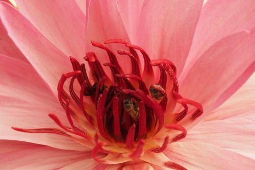 sacred lotus bodh gaya india