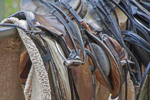 saddle horse equestrian