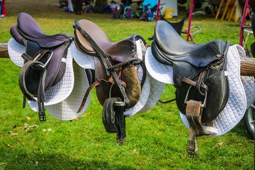 saddle  ride  equestrian