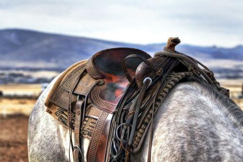 saddle horse cowboy