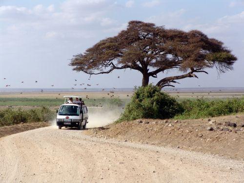 safari africa tree